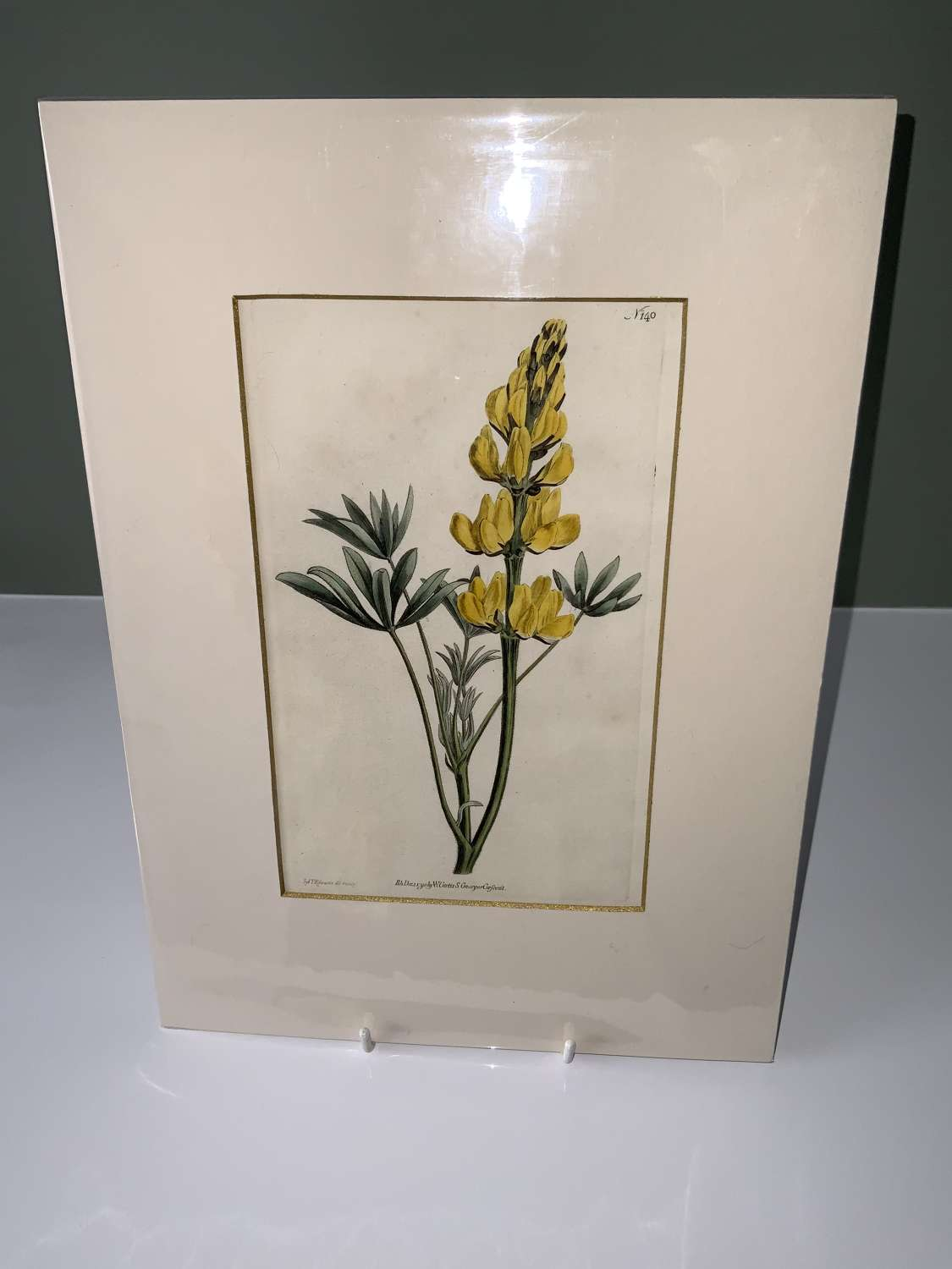 19th Century Botanical prints