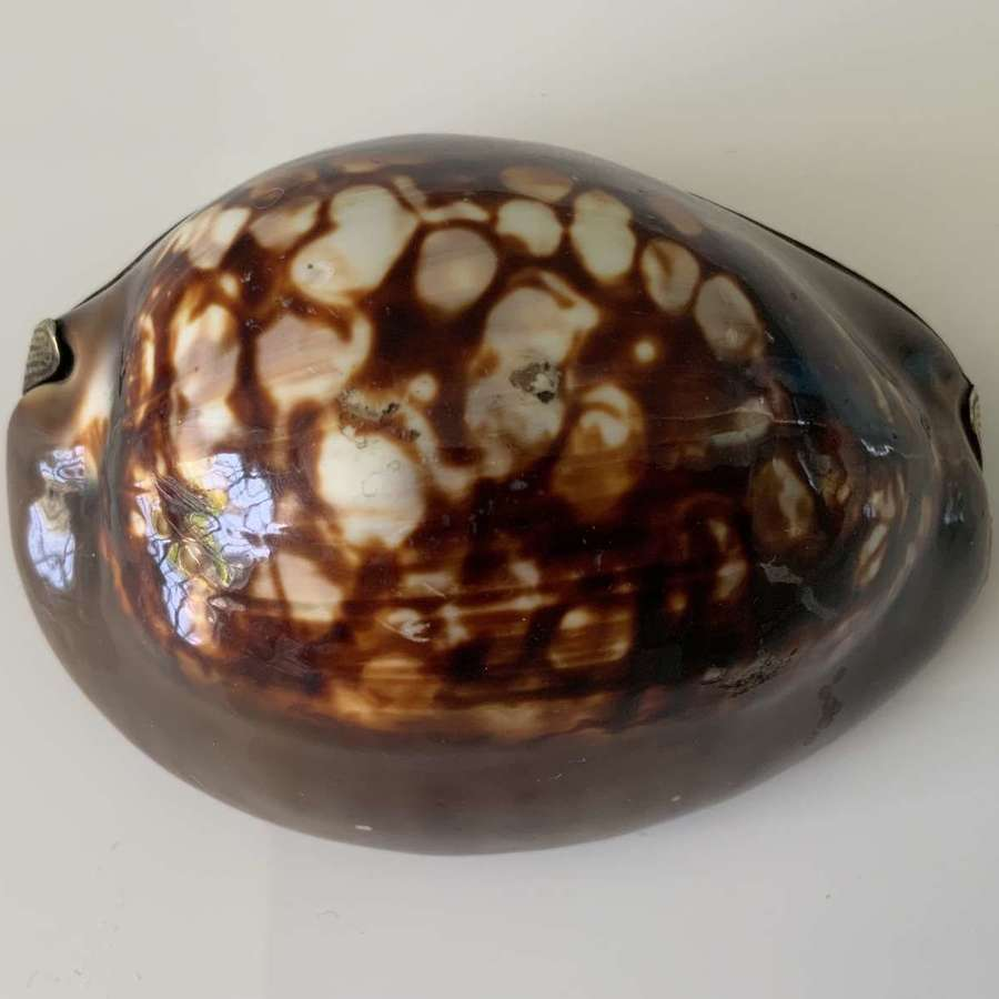 18th Century French full cowrie snuff box